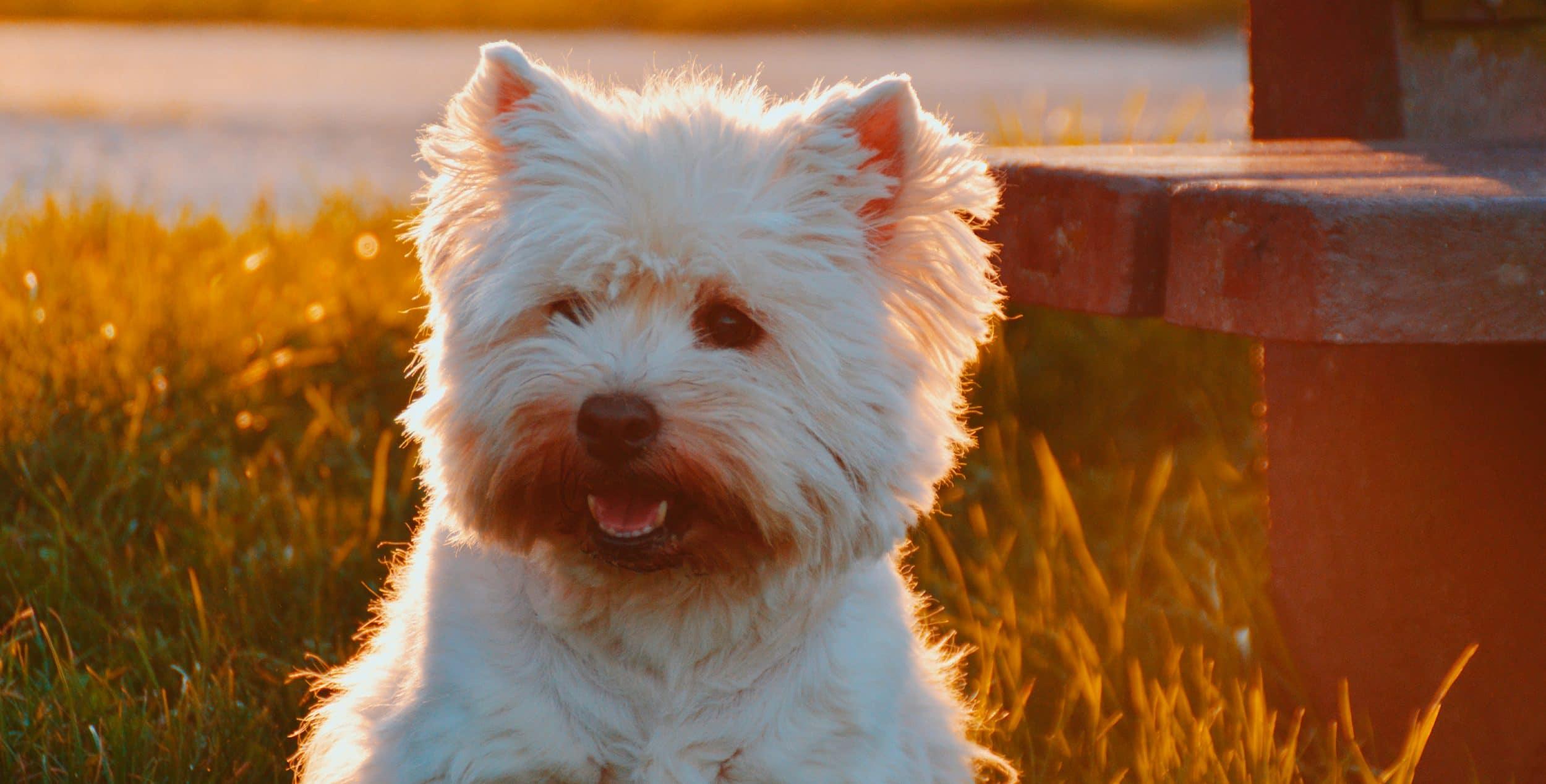 Chien adoption Urgence Maltraitance Animale