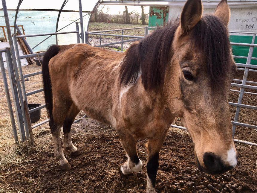 UMA participe au sauvetage de 106 chevaux à Challans (85